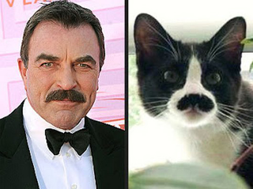 cats who look like famous people 3 Tom Selleck