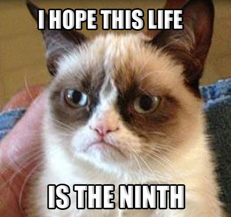 Grumpy Cat NINE LIVES