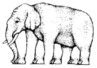 hidden image (elephant feet)