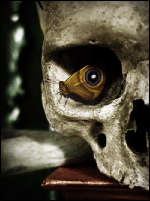 hidden-images-007-moth-skull