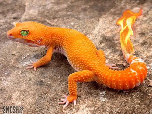 004 real life like pokemon Charmander