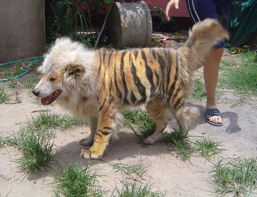 059 pokemon real life like Arcanine