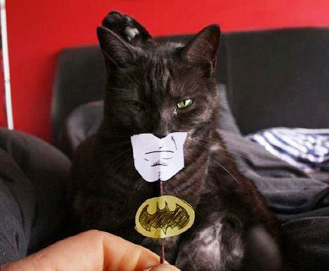 batman face cat