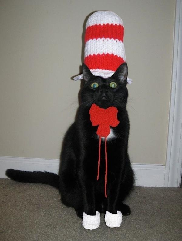 cat in the hat pet costume