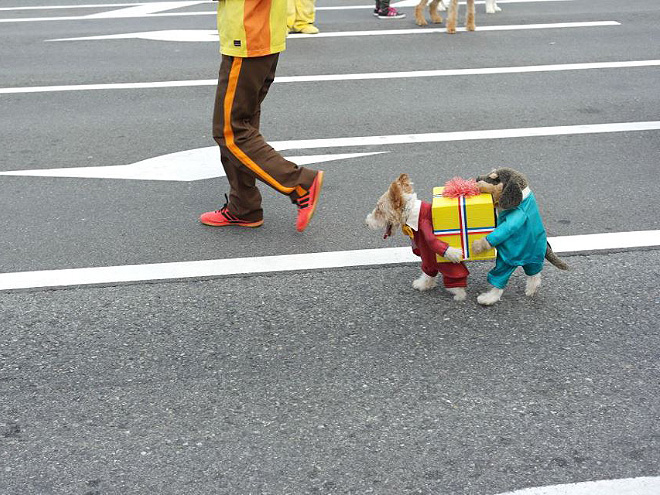 dog box pet costume meme
