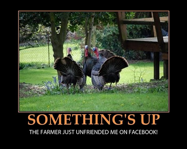 thanksgiving meme 017 farmer unfriended turkey