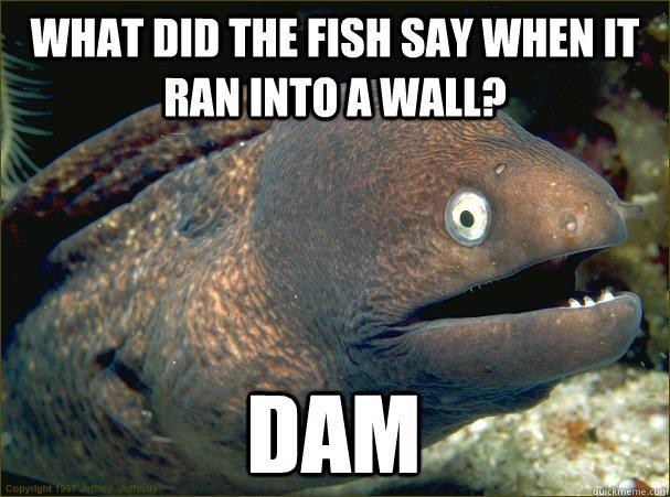 Bad Joke Eel 003 fish say dam wall