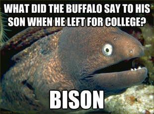 Bad Joke Eel 013 college bison