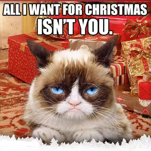 All I Want For Christmas Meme.Grumpy Cat Christmas Meme 005 All I Want For Christmas