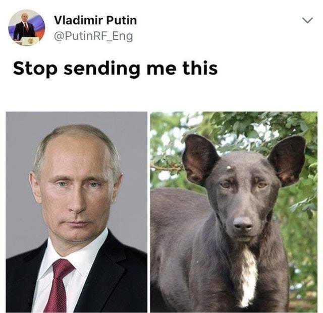 Stop Sending Me This Meme 003 Vladimir Putin Dog Comics And Memes