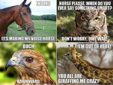 Animal Pun Memes Comics And Memes
