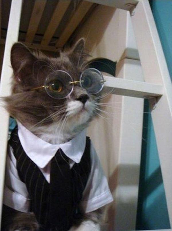 pet costume 008 harry potter cat & pet costume 008 harry potter cat u2013 Comics And Memes